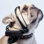 No More Woof — читаем мысли собак
