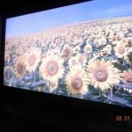 Для нового телевизора Sharp не нужны 3D очки